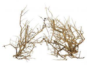 progrow_branch_wood_07