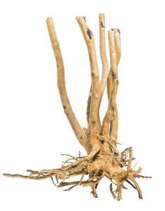 progrow_fine_wood_stump_05