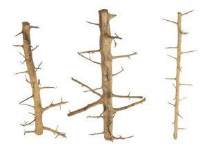 progrow_tree_wood_02